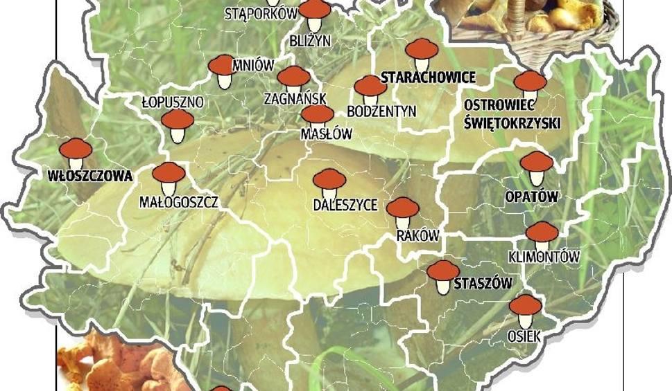 Grzybobranie mapa występowania grzybów w województwie świętokrzyskim