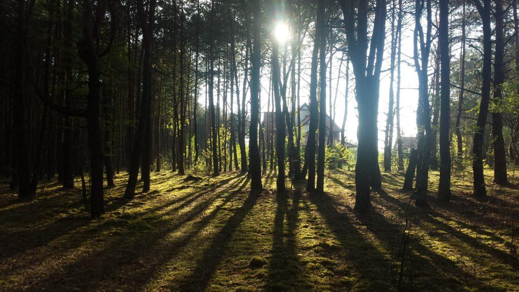 Noclegi góry świętokrzyskie w sercu lasu sosonowego